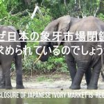 "Short video ""No Ivory in Japan"""