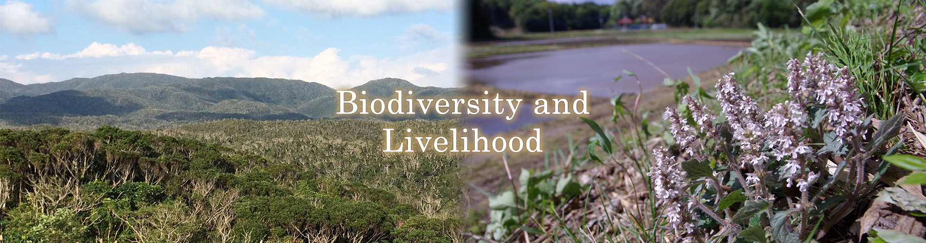 Biodiversity and Livelihood