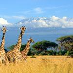 ケニア、キリマンジャロとキリン